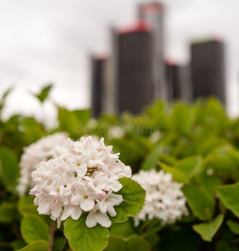 Архитектура Детройт самая точная в городе стоковая фотография rf