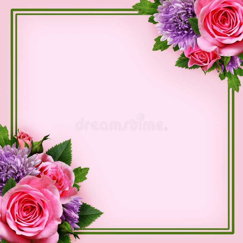 Астра и розовое расположение цветков и рамка стоковое фото
