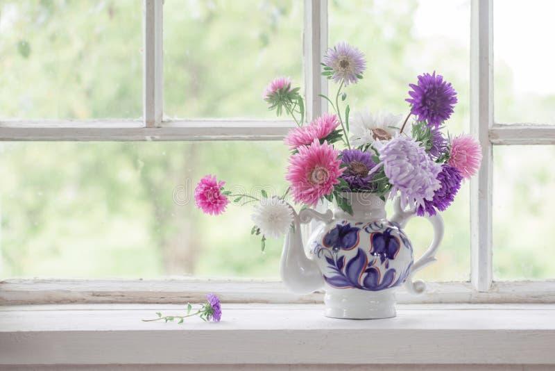 Астры в чайнике на windowsill стоковая фотография rf
