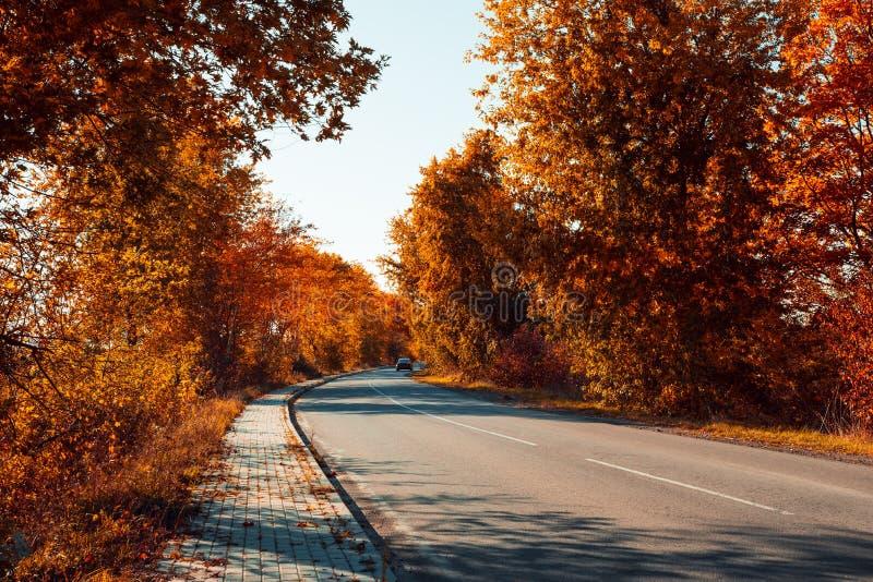 Асфальт-кудровая дорога с автомобилем и падающими листьями на осеннем лесу стоковая фотография rf
