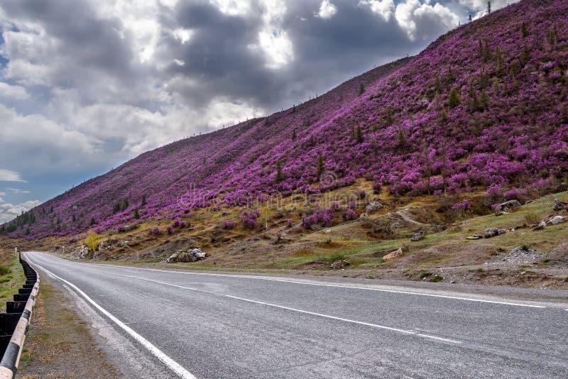 Асфальт рододендрона гор дороги пасмурный стоковые изображения rf