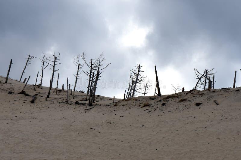 Атлантика, дюны, чуть-чуть деревья в штормах линии фронта стоковое изображение rf
