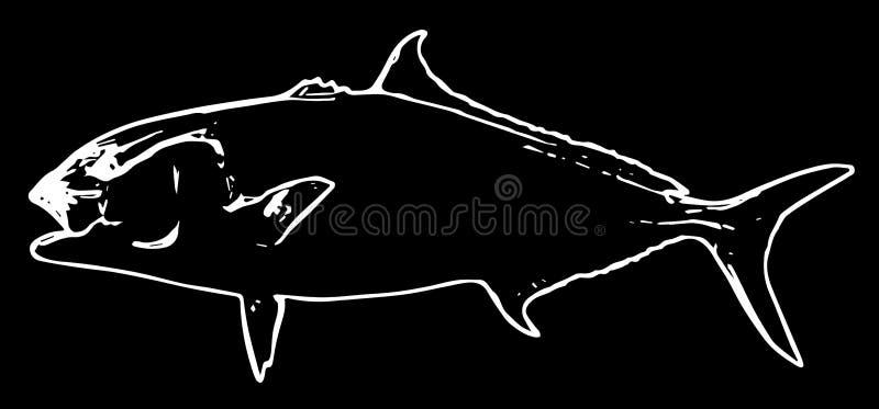 Атлантика рыбы amberjack удя на черной предпосылке иллюстрация штока
