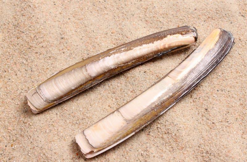 атлантический jackknife стоковое фото