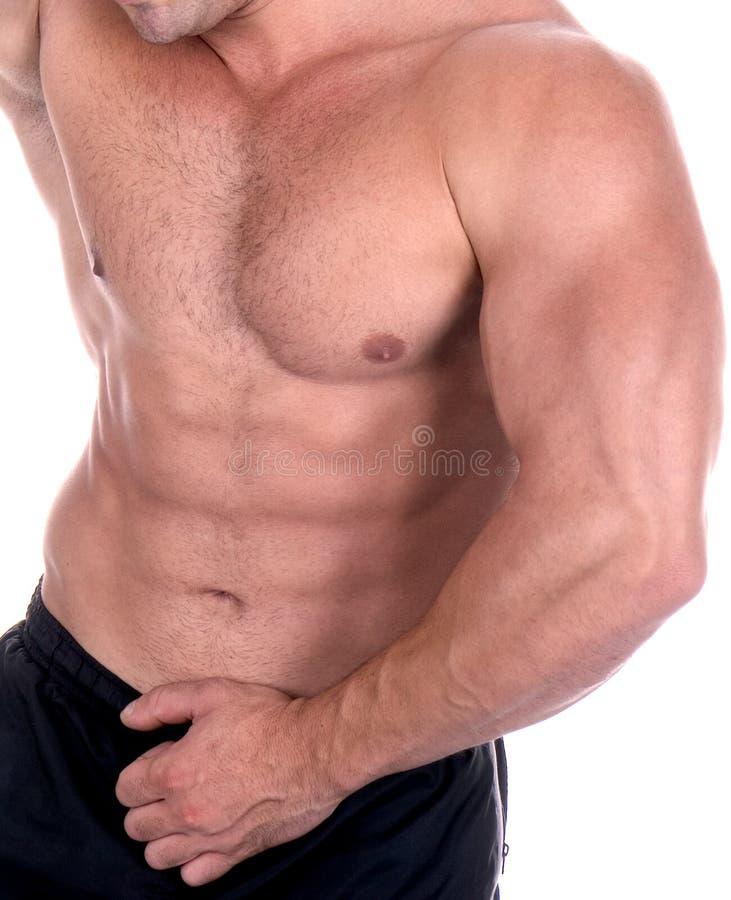 Атлетический сексуальный строитель мыжского тела стоковые изображения rf