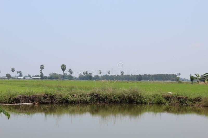 Атмосфера в рисовых полях стоковое фото rf
