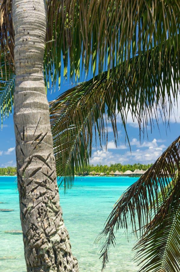 Атолл Rangiroa, Французская Полинезия стоковые фотографии rf