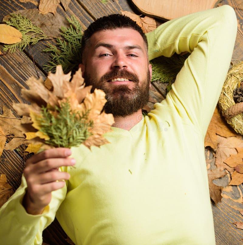 Атрибуты атмосферы падения Битник с бородой наслаждается букетом листьев осени владением сезона Концепция сезона падения и осени стоковое изображение