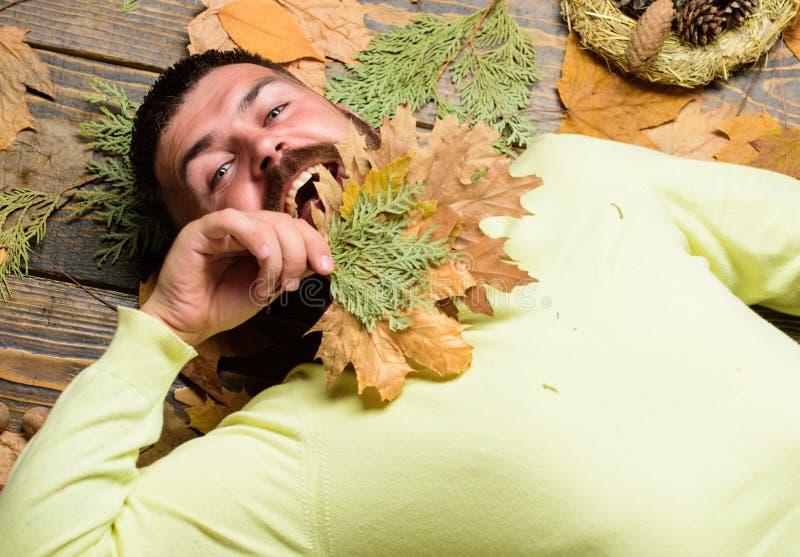 Атрибуты атмосферы падения Положение битника человека бородатое на деревянной предпосылке с апельсином выходит взгляд сверху Паде стоковое фото