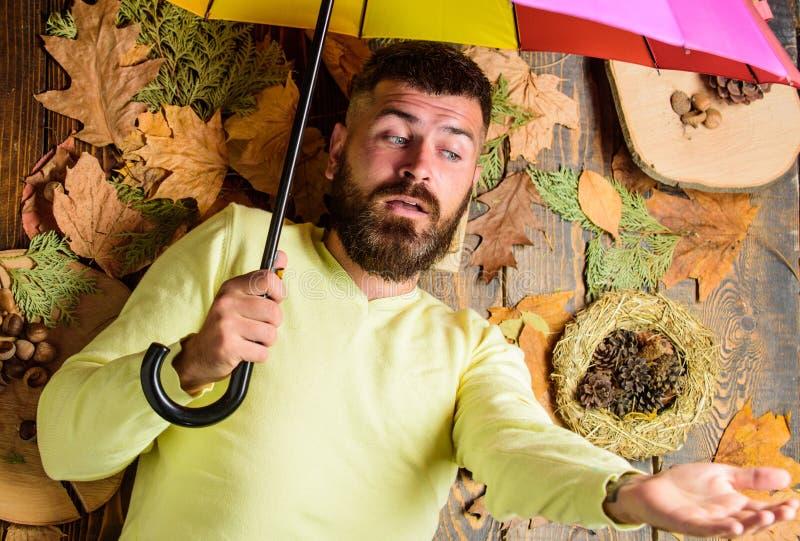 Атрибуты атмосферы падения Укомплектуйте личным составом бородатое положение на деревянной предпосылке с взгляд сверху листьев Би стоковые изображения
