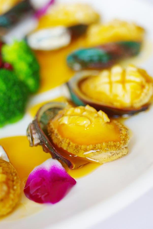 африканец abalone южный стоковое изображение rf