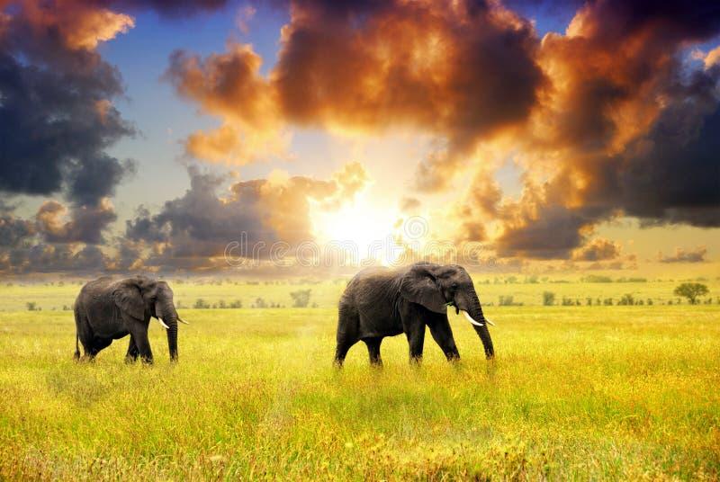 африканская живая природа стоковое изображение