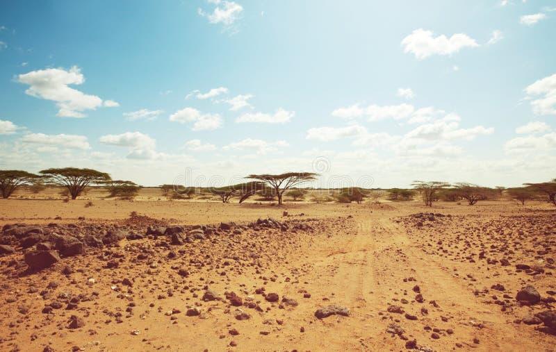 Африканская экспедиция стоковая фотография