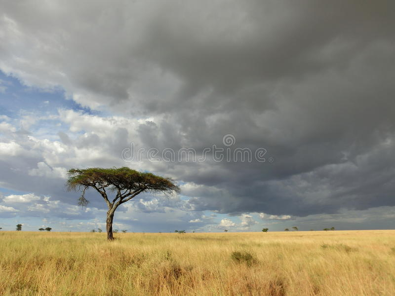 Африканские равнины стоковые фотографии rf