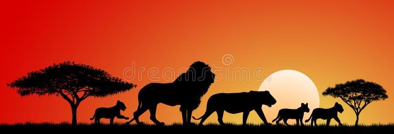 африканские львы иллюстрация штока