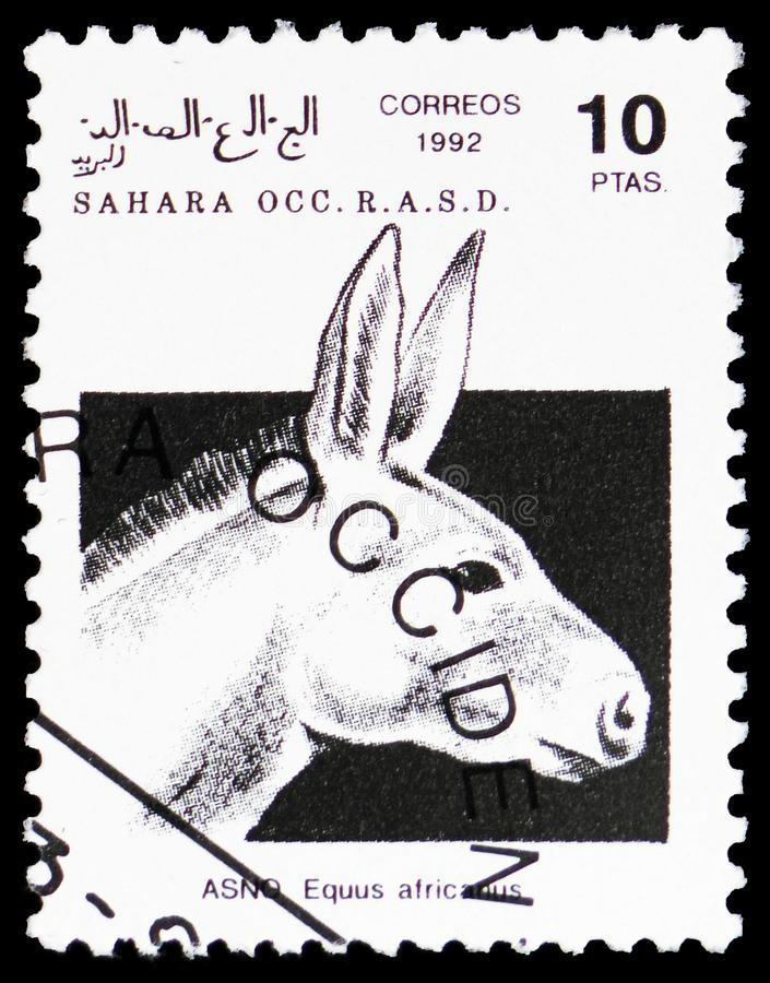 Африканский дикий ишак (africanus), Сахара Occ Equus serie, около 1992 стоковая фотография