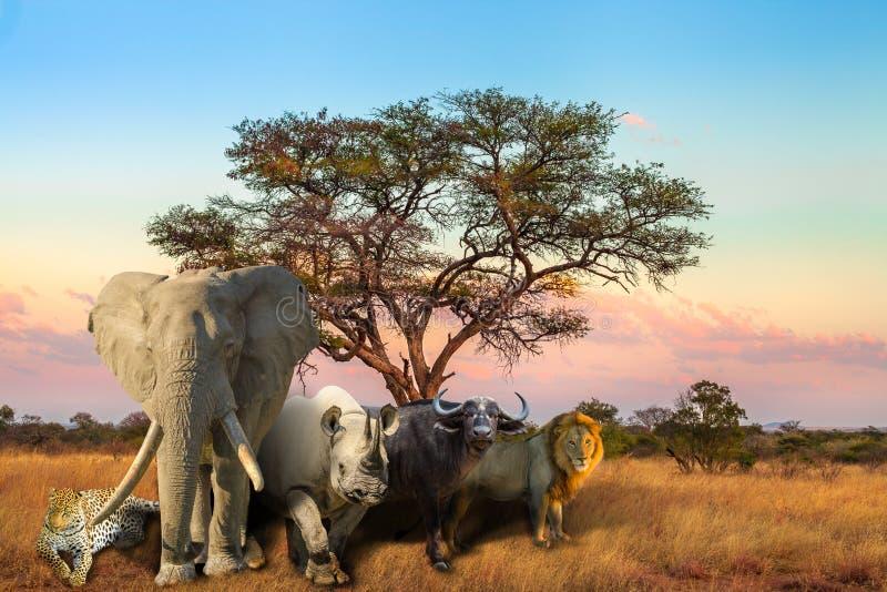 Африканский заход солнца Большой Пятерки стоковые изображения rf