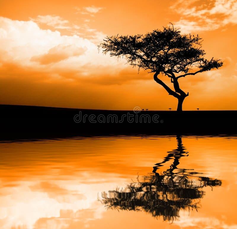 африканский заход солнца стоковые фотографии rf