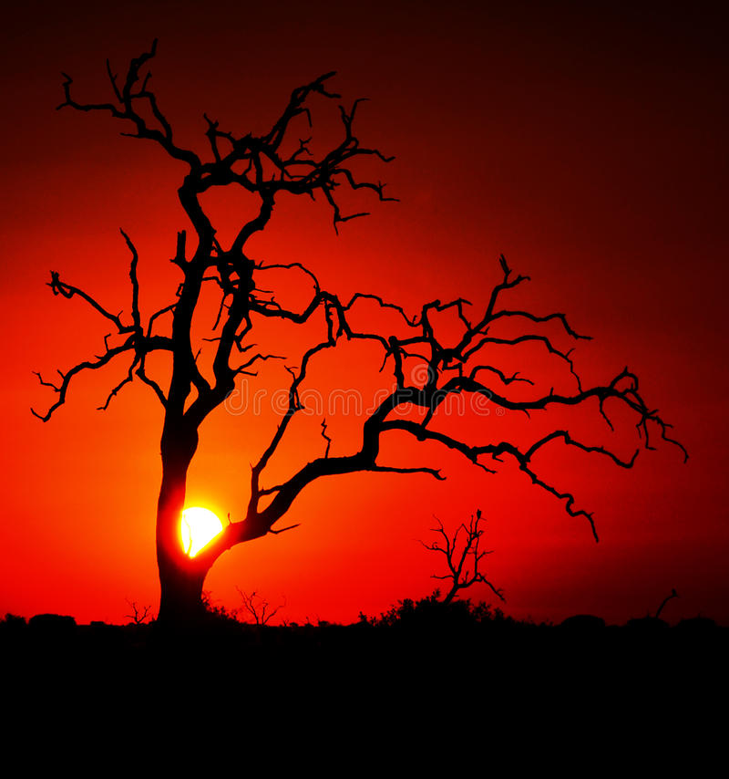 африканский заход солнца стоковые изображения
