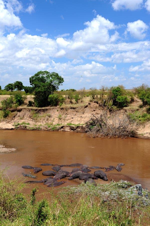 Африканский ландшафт глуши стоковые фото