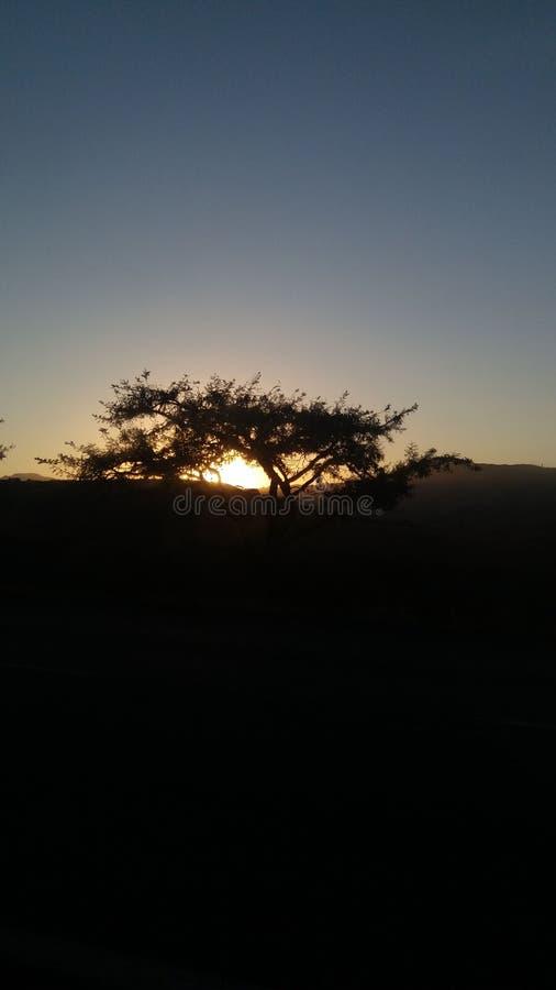Африканское дерево стоковые фотографии rf