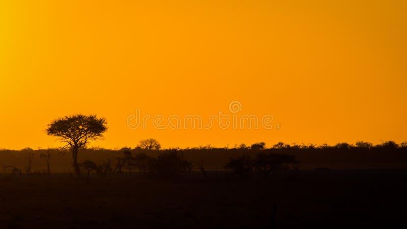 Африканское небо на заходе солнца стоковые фотографии rf