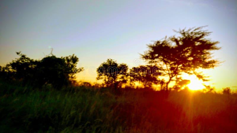 африканское солнце стоковые изображения rf