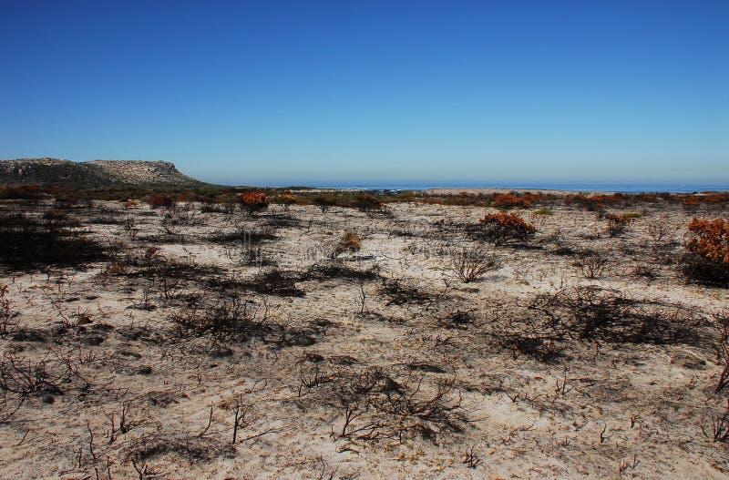 Африка сгорела жизнь растений на пляже полуострова накидки в южном Af стоковое изображение