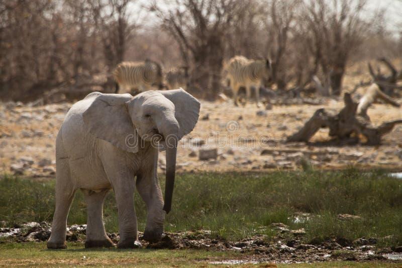 Download Африка стоковое изображение. изображение насчитывающей огромно - 18391317