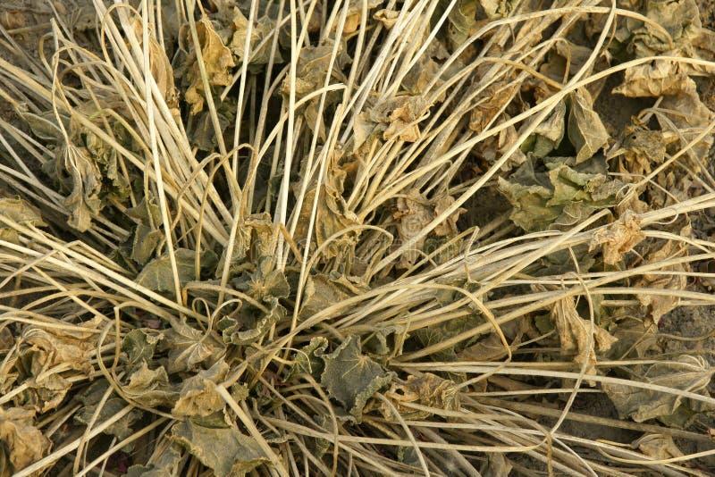 ая трава стоковые фото