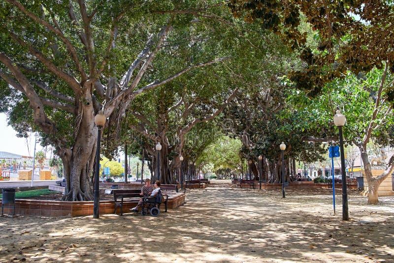 Аликанте, Испания - 30-ое июня 2016: Фикусы переулка в парке Canalejas Продолжение прогулка Explanada Испании внутри стоковые изображения rf