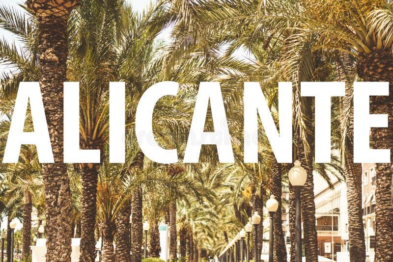Аликанте - текст перед пальмами стоковая фотография