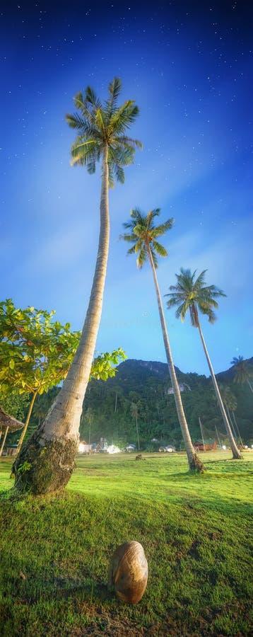 ладони иллюстрации конструкции кокоса предпосылки белые Таиланд стоковая фотография rf