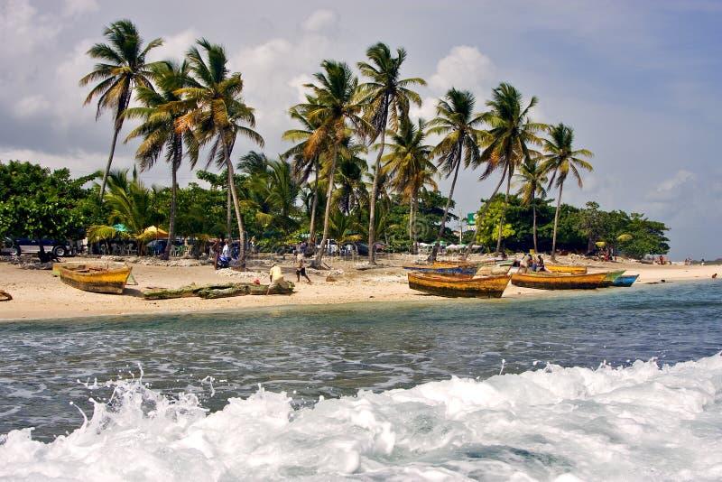 ладонь и дерево работы в Доминиканской Республике стоковое изображение