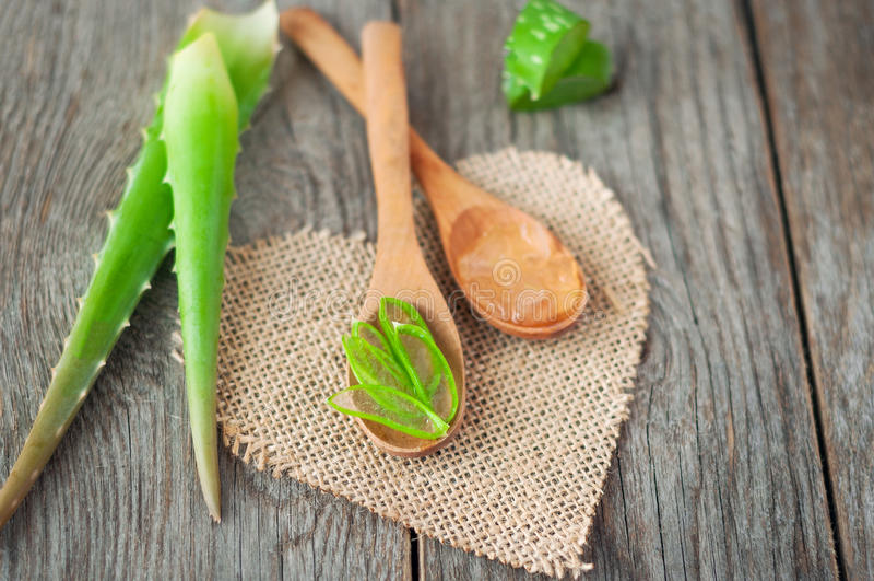 алоэ соединяет vera Полезная трава для заботы и ухода за волосами кожи стоковое изображение