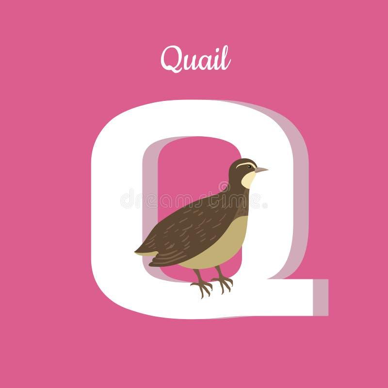 Алфавит животных Письмо - q иллюстрация вектора