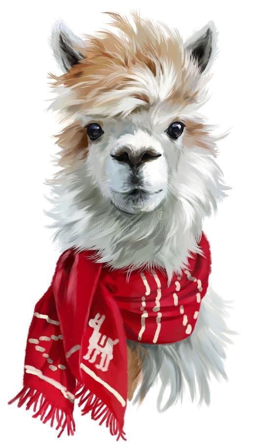 Альпака нося красный шарф стоковое изображение rf