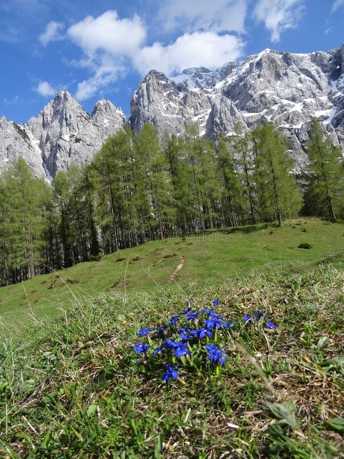 Альп в Словении стоковое фото