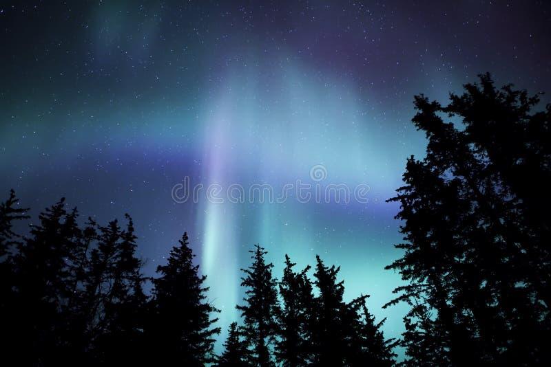 Аляскский рассвет с деревьями стоковая фотография rf