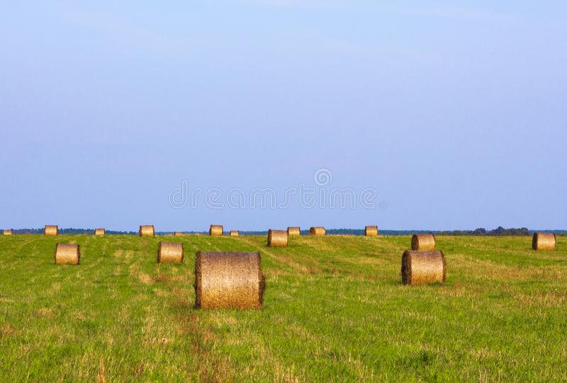 А field with rolls of hay at sunset. Wallpaper royalty free stock images