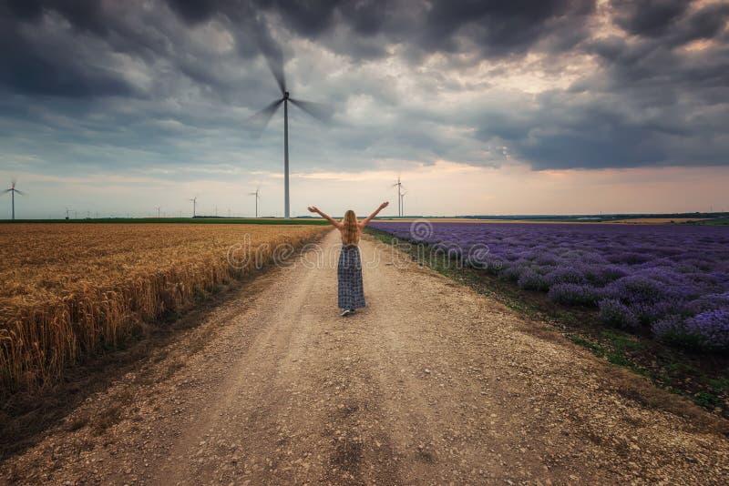 ?-Hauch des Lavendels und des Weizens stockfotografie