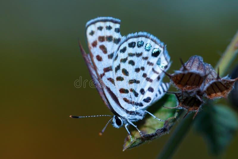 Бабочка, бабочка на цветках стоковое фото rf