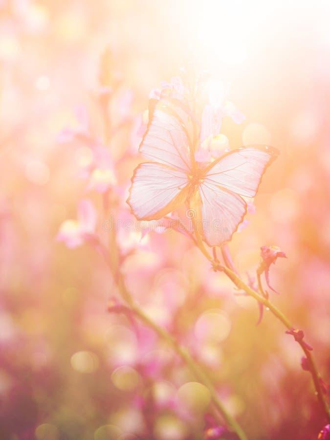 Бабочка весной стоковое фото rf