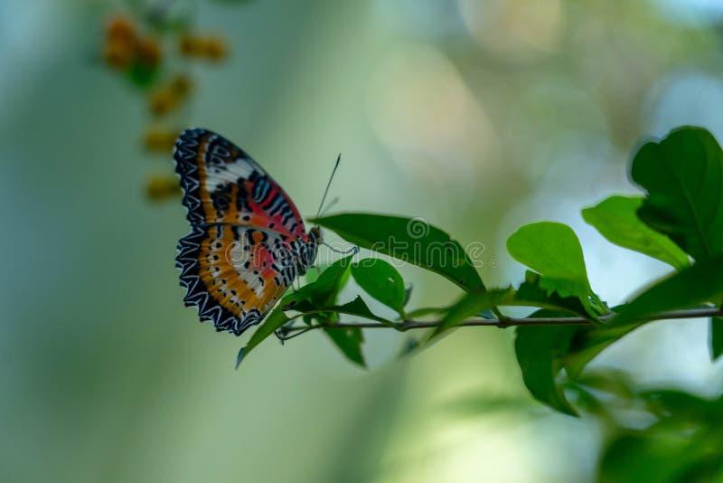 Бабочка вися вне на густолиственной ветви стоковое фото