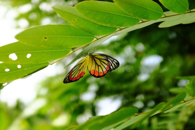 Бабочка в лесе стоковые изображения rf