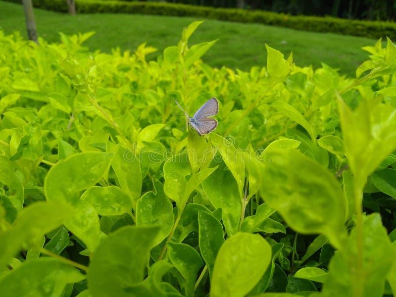 Бабочка в моем саде стоковые изображения