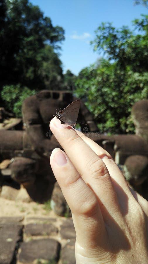 Бабочка в наличии стоковое изображение rf