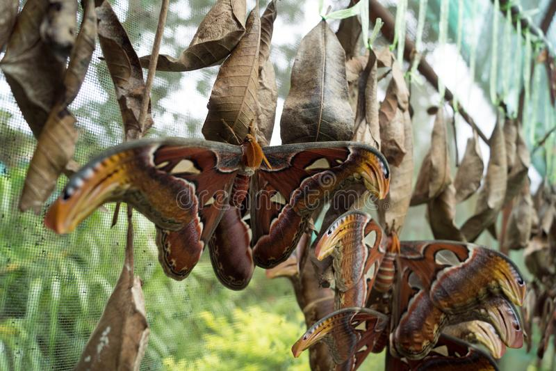Бабочка в оправе Чиангмае Mae в Таиланде стоковое изображение rf