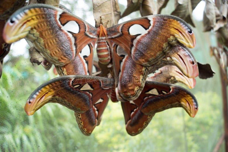 Бабочка в оправе Чиангмае Mae в Таиланде стоковые фото