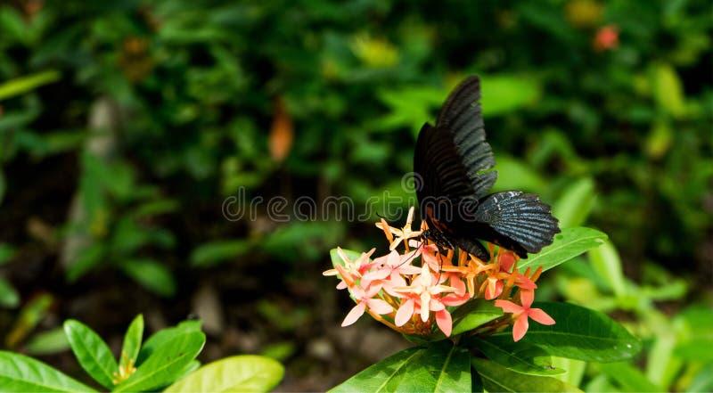 Бабочка в природе стоковые фотографии rf